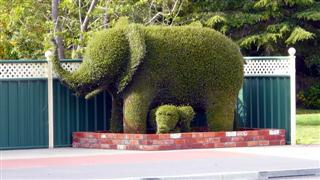 Railton - Town of Topiary