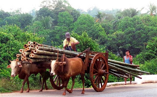 Transporting Bamboo