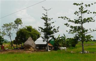 Cambodia_farm