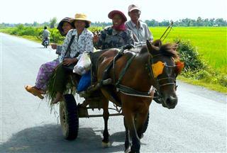Pony_Cart