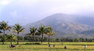 Rice_Harvest_Panay