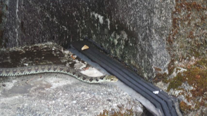 Snake on bridge