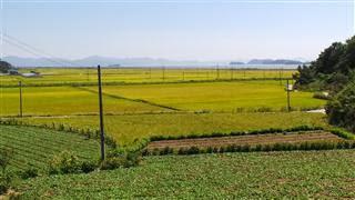 Coastal Rice Fields