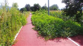 Cyclepath Invasion
