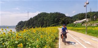 Sunflowers at the Side of the River Han