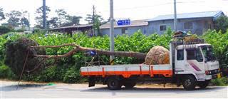 Tree Transport
