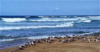 Gulls on the Beach at Yeonghae