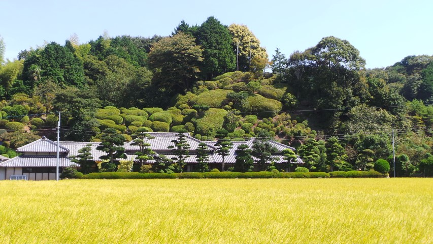 Traditional Japanese garden above rice paddy