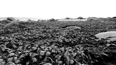 Oyster shells set in lava