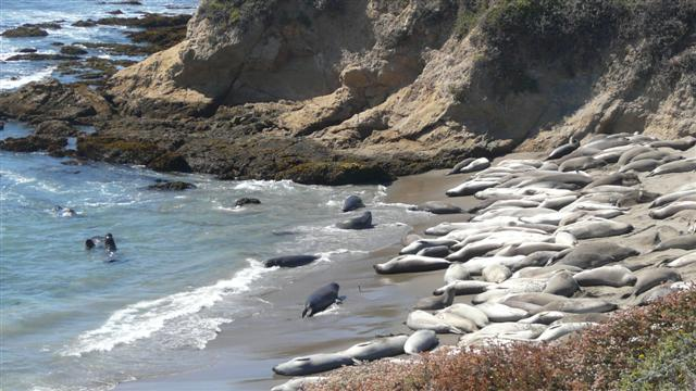 Basking Seals