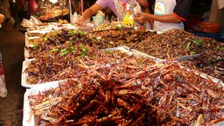Grubs and Bugs Krabi Night Market