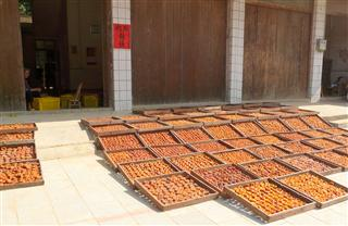 guangxi_persimmon_fruit_drying