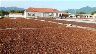 guangxi_star_anise_drying