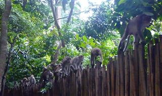 Monkeys at Railey