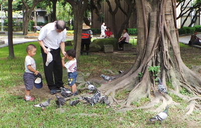 Feeding the Birds in the Taipei Peace Park