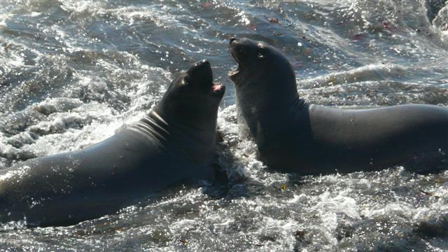 Sparring Seals