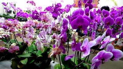 Tainan Flower Market