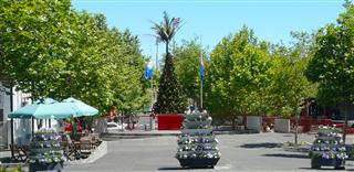 Wanganui Christmas Tree