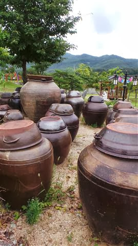 Traditional Fermenting Pots