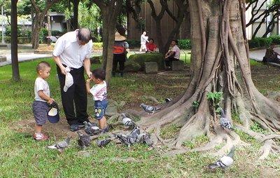 Feeding the Birds in the Taipei Peace Park